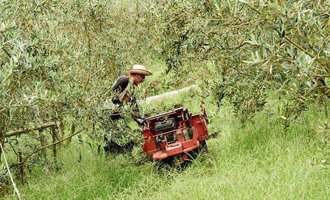 未来を見据えて、持続可能な農業に取り組んでおります。