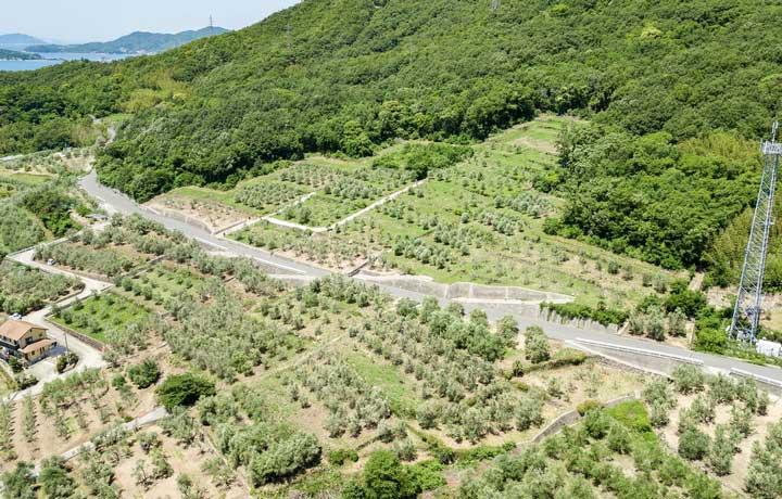 手摘みで収穫した良質のオリーブを、本社工場で、フレッシュなうちに採油します。
